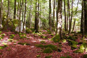 Wald kurz vor Bullau